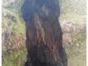 drevo5a
