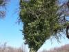drevo5e
