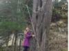 drevo5g