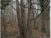 drevo5i