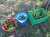 naravoslovni-dan_zasaditev-vodnih-rastlin_oc5a1-lesic48dno_maj-2021_ej-11